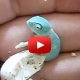 Baby Chameleon Hatches Video
