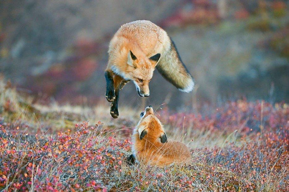 Wildlife Photos Distractify