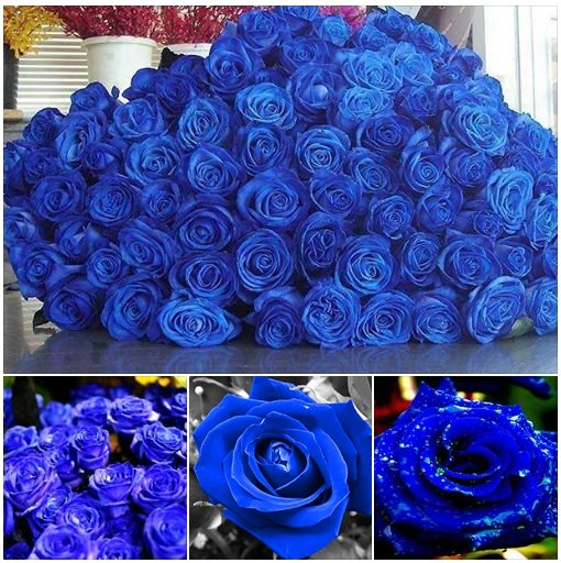 ArchiDesign Blue Roses