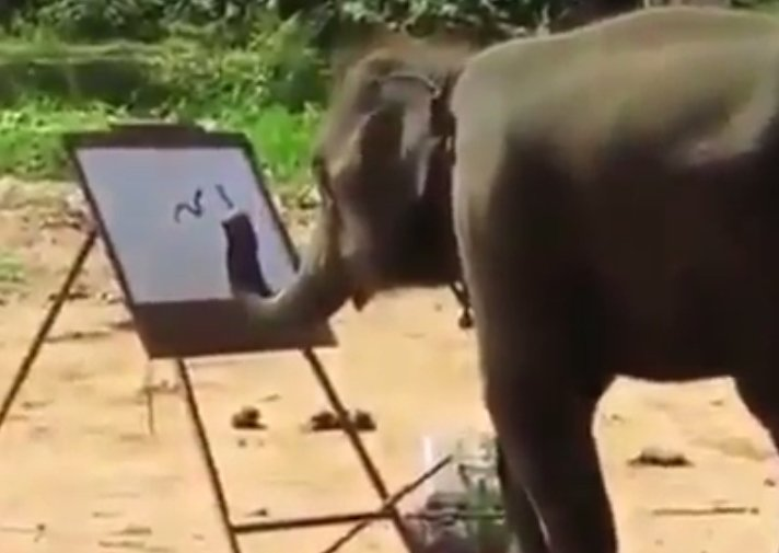 Elephant Drawing Elephant