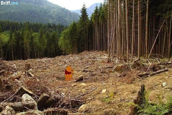 Disney meets Climate Change - Winnie the Pooh and the Forest