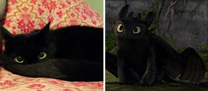 Similar to Each Other 6 - Black Cat Looks Like Toothless from How To Train Your Dragon