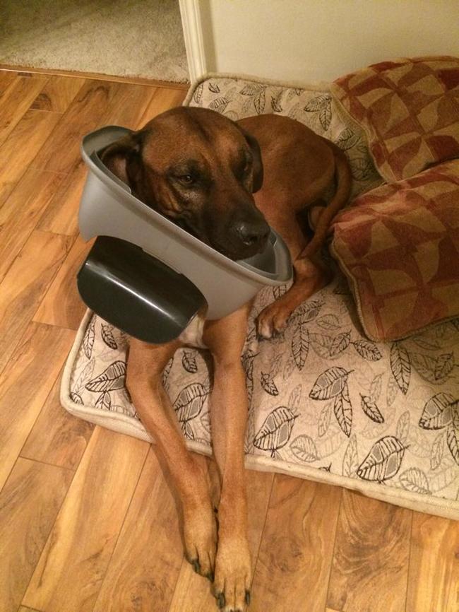כלבים-אשמים-16
