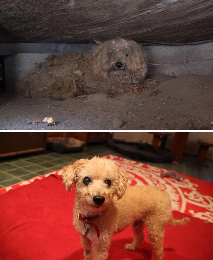 Dog Before and After Rescue