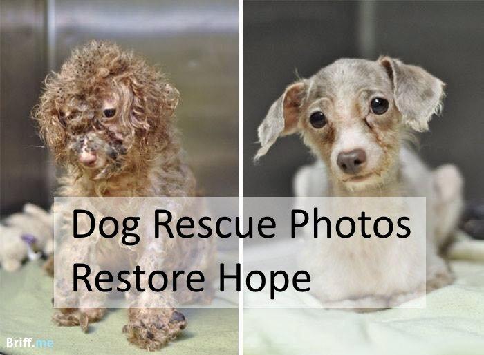 Dog Rescue Photos