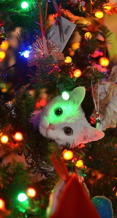 Funny Christmas Trees 12 Cat Tree