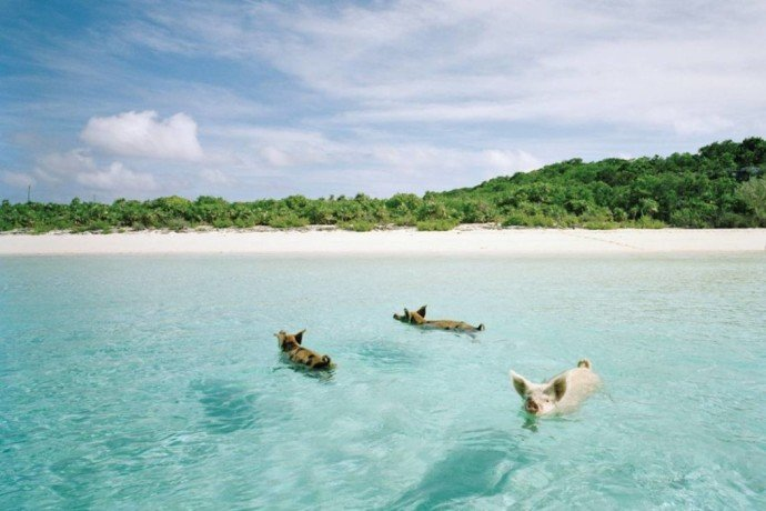 Amazing Beaches 9 Pig Beach