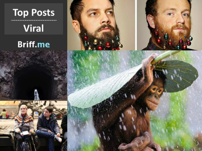 Viral Briff 10Dec2014