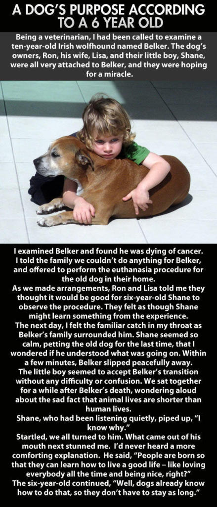A 6-year-old Explains Dog's Life and Death - Sad Memes