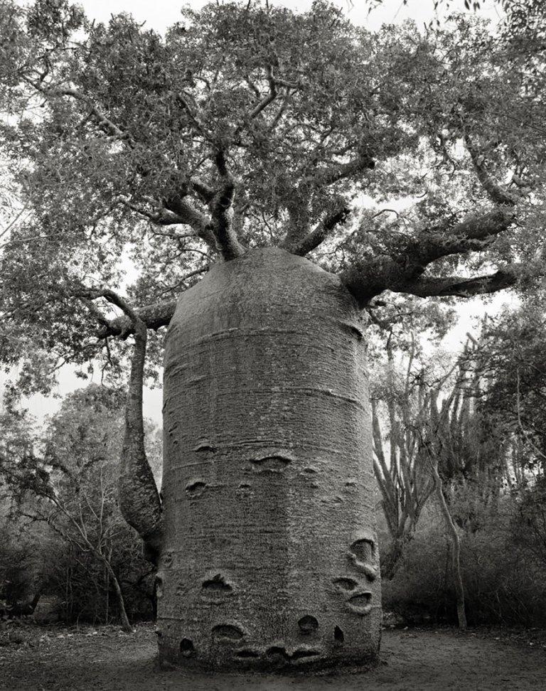 beth moon oldest trees