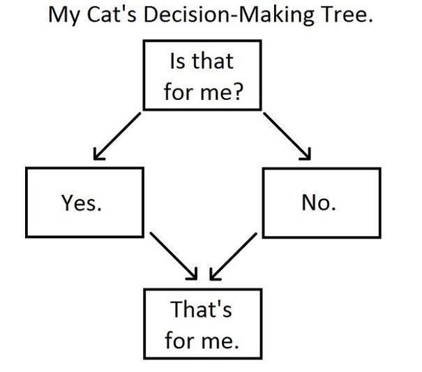 cat's memes