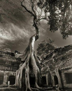beth moon oldest trees