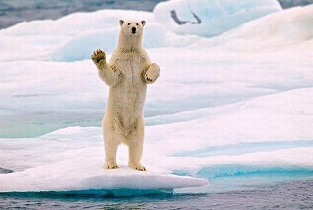 Animals Waving Goodbye Polar Bear