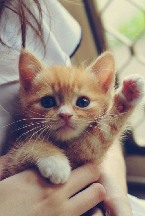 Animals Waving Goodbye 11 Cat