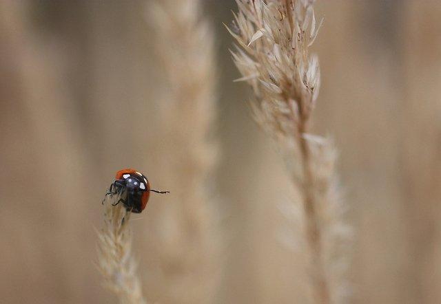 Animals Waving Goodbye 12 Lady Bug