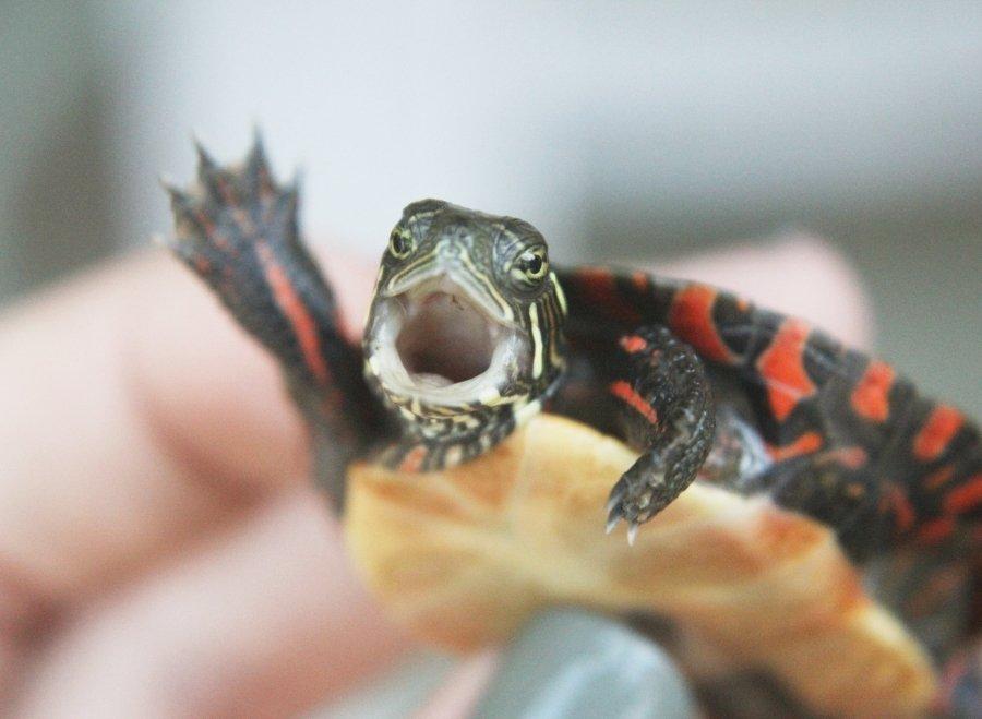Animals Waving Bye 13 Turtle