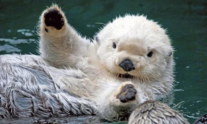 Animals Waving Bye 14