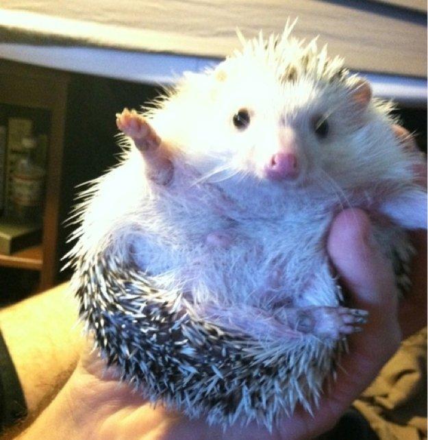 Animals Saying Goodbye 19 Porcupine