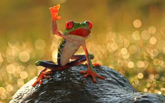 Animals Waving Goodbye Frog
