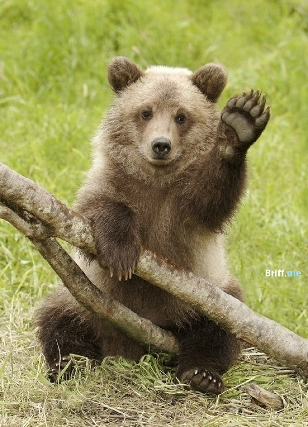 Animals Waving Goodbye 20 Best Bear