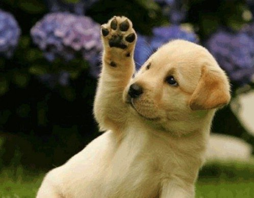 Animals Waving Goodbye 3 Puppy