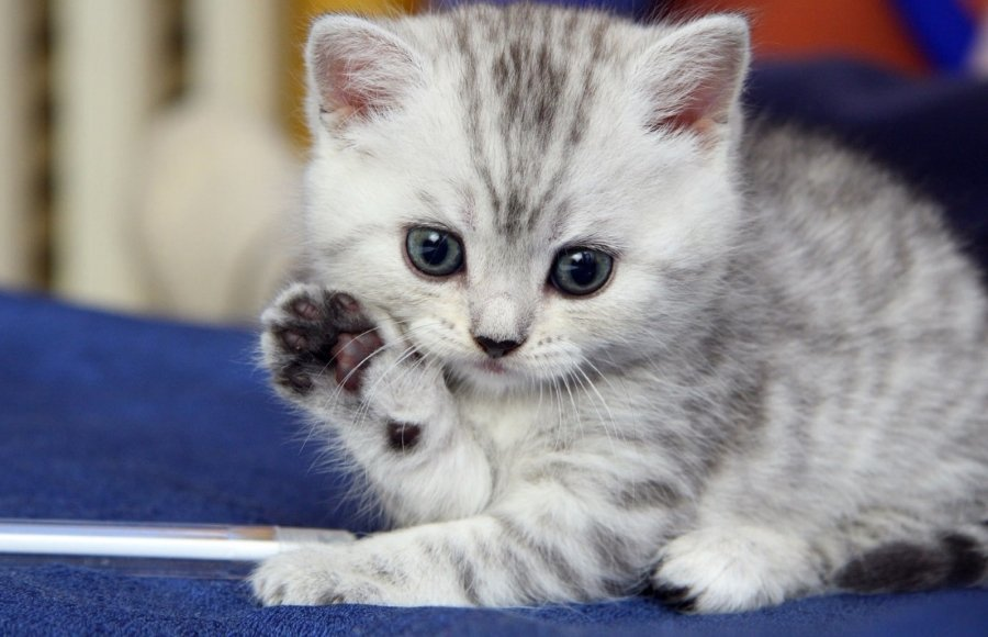 Animals Waving Goodbye 4 Kitten