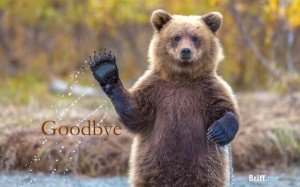 Animals Waving Goodbye Photos