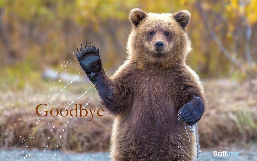 Animals Waving Goodbye Photos