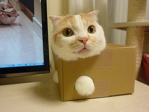 Cat Stuck Funny Photos 1 box