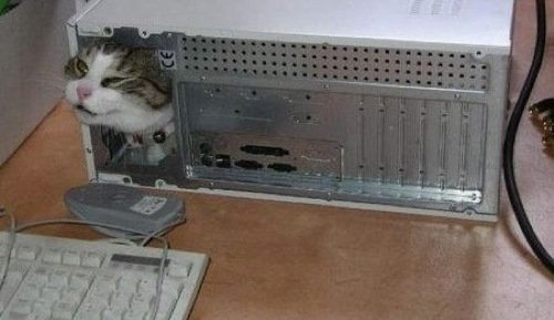 Cat Stuck Funny Photos 10 computer