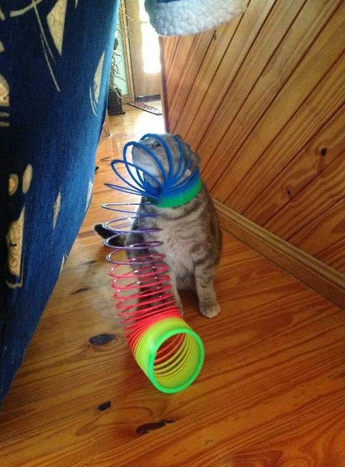 Cat Stuck Funny Photos 10 slinky