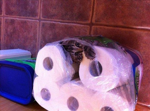 Cat Stuck Funny Photos 12 toilet paper
