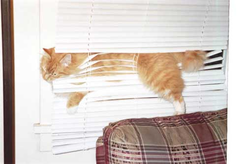 Cat Stuck Funny Photos 13 blinds