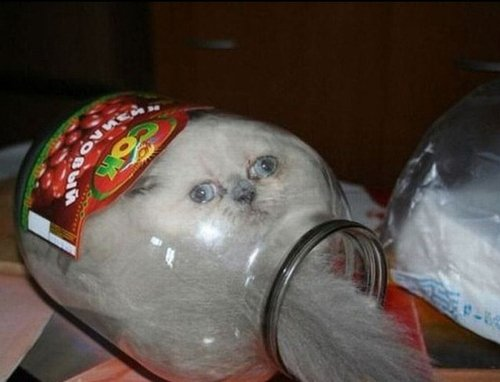 Cats Stuck Funny Photos 14 jar