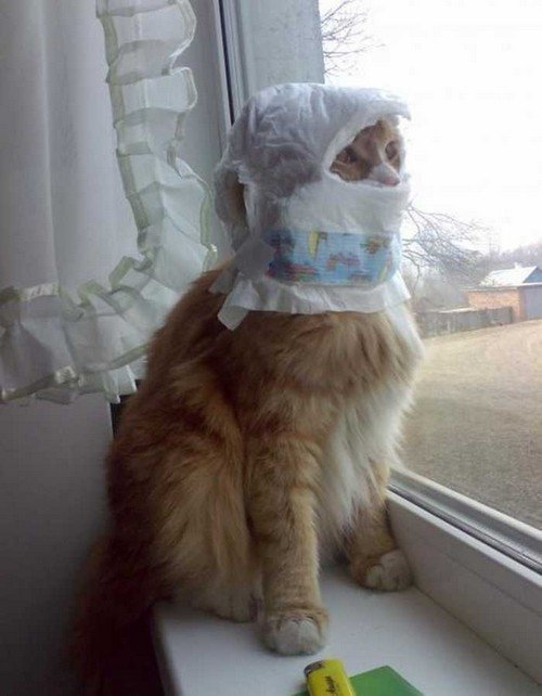 Cat Stuck Funny Photos 15 diaper