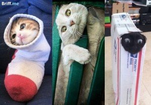 Cat Stuck Funny Photos