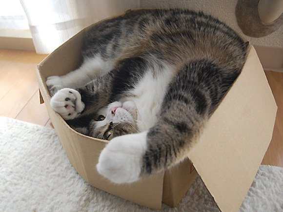 Cat Stuck Funny Photos 4 carton