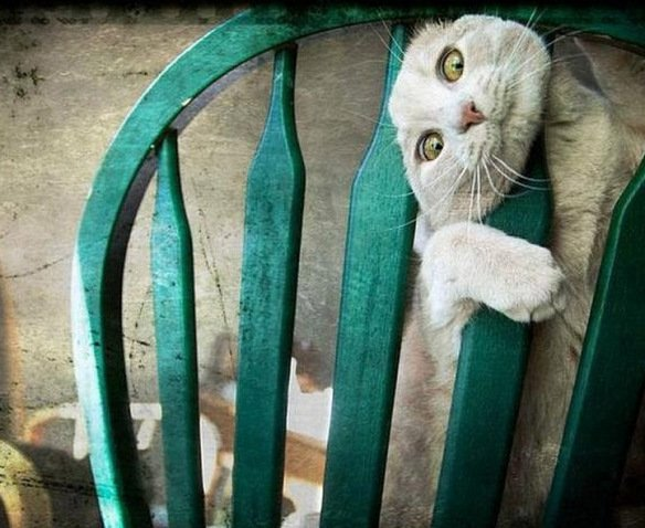 Cats Stuck Funny Photos 4 chair