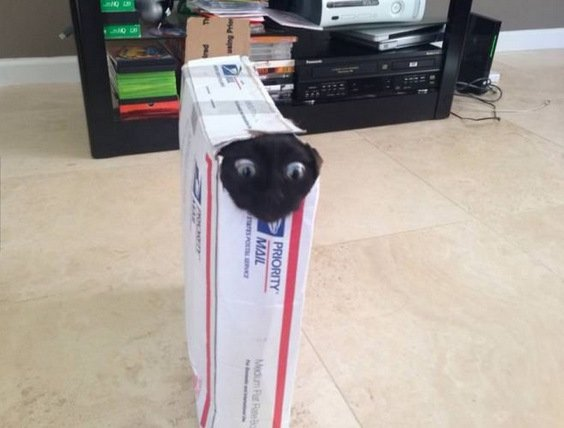 Cat Stuck Funny Photos 5 box