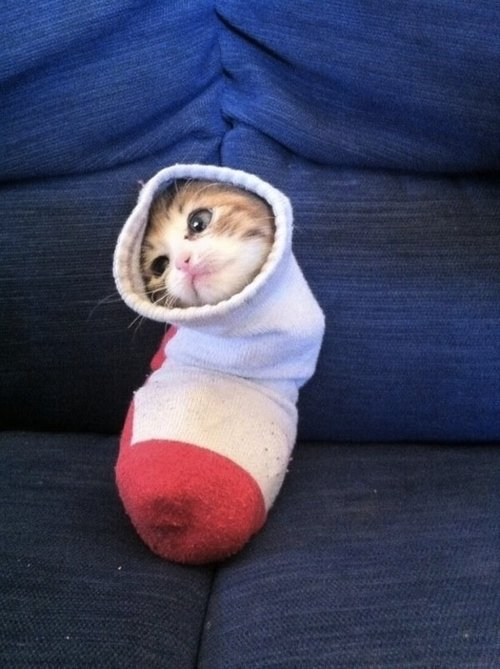 Cats Stuck Funny Photos 5 sock