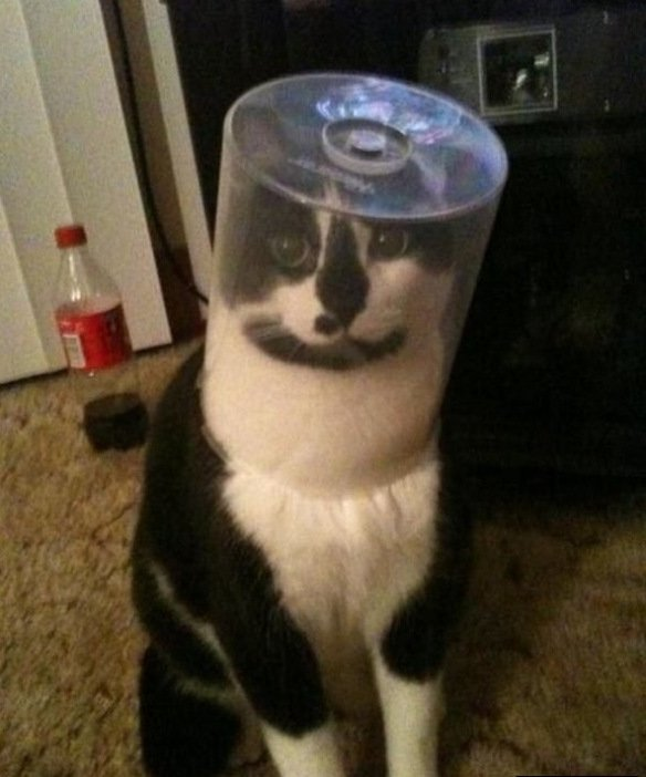 Cats Stuck Funny Photos 6 plasti
