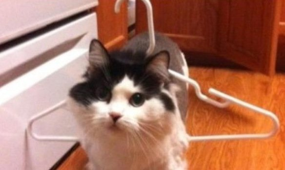 Cat Stuck Funny Photos 7 hanger