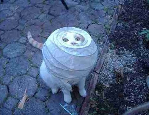 Cats Stuck Funny Photos 8 lamp