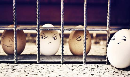 Funny Eggs 13 jail