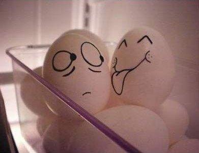 Funny Egg photos 8 Lick