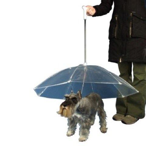Dog Umbrellas