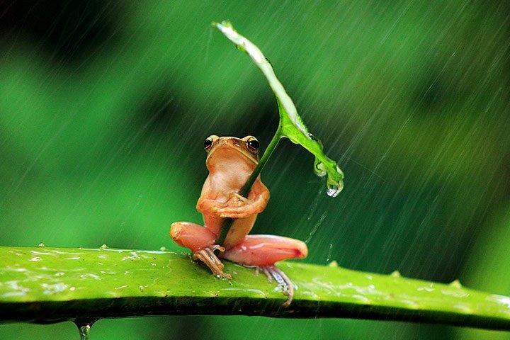 Natural Leaf Umbrella Frog
