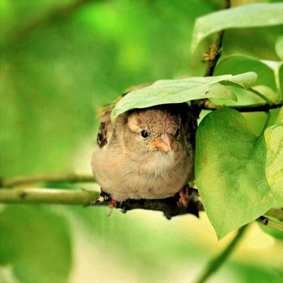 Natural Leaf Umbrella Bird