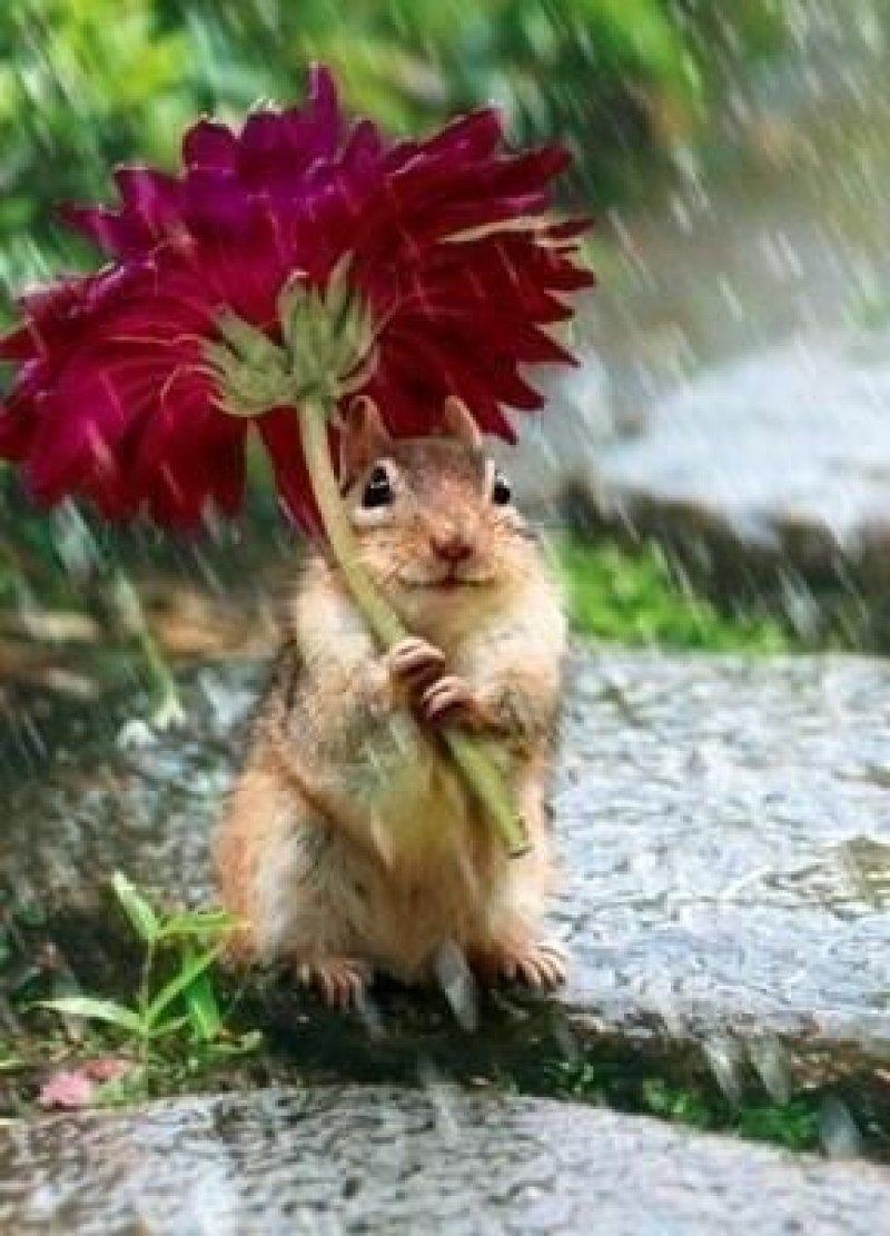 Natural Flower Umbrellas Chipmunk