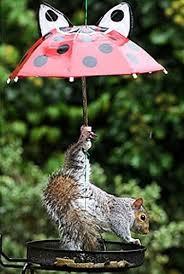 Squirrel under Umbrellas